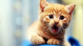 Cats and dogs acting like babies – Cute animal compilation