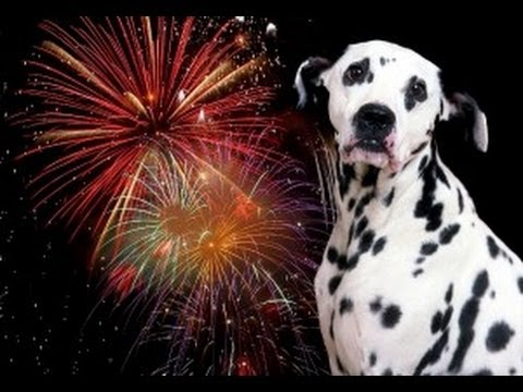 Dog Scared Of Fireworks Video
