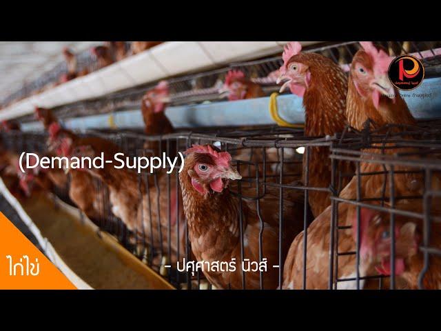 รักษาเสถียรภาพราคาไข่ไก่ ผลิตสอดคล้องกับความต้องการ (Demand-Supply) - ปศุศาสตร์ นิวส์