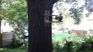 Squirrel Homemade Crib
