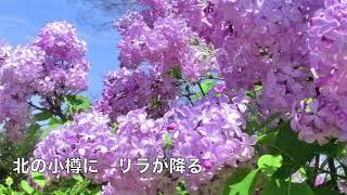 2018年8月29日発売! 作詞:朝比奈京仔 作曲:徳久広司 「秘話」のカッ...