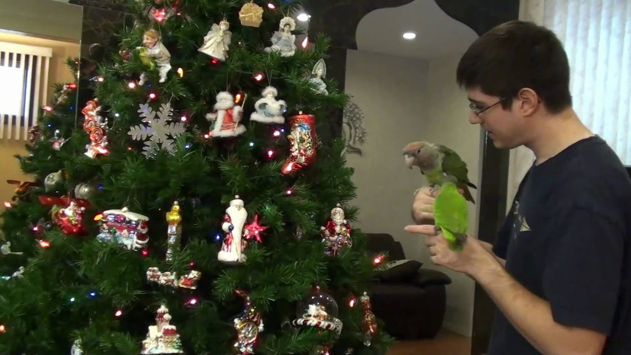 parrots help put up christmas tree decorations