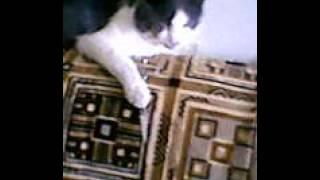 Кот ненавидет хазяина