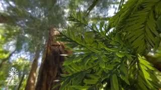 전자현미경으로 본 잎의 속사정