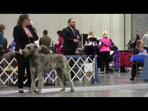 10-01-2017 Hot Springs National Park Kennel Club-Irish Wolfhounds