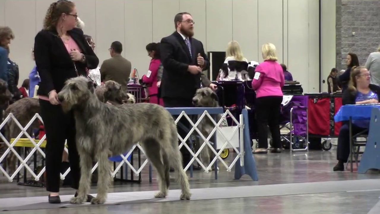 Hot Springs National Park Kennel Club Dog Show
