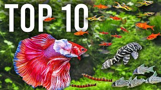 Top 10 Betta Tank Mates for Community Fish Tanks