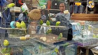Burung Parkit Berbagai Jenis Ada di Sini