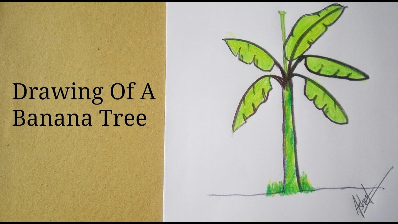 Uncategorized How To Draw A Banana Tree how to draw a banana tree for kid youtube kid