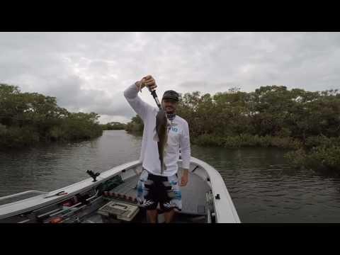 Chasin Mangrove Jack Pine River... Dirty Catfish