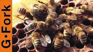 Dead Bees? Hive Inspection - Beekeeping 101 - GardenFork