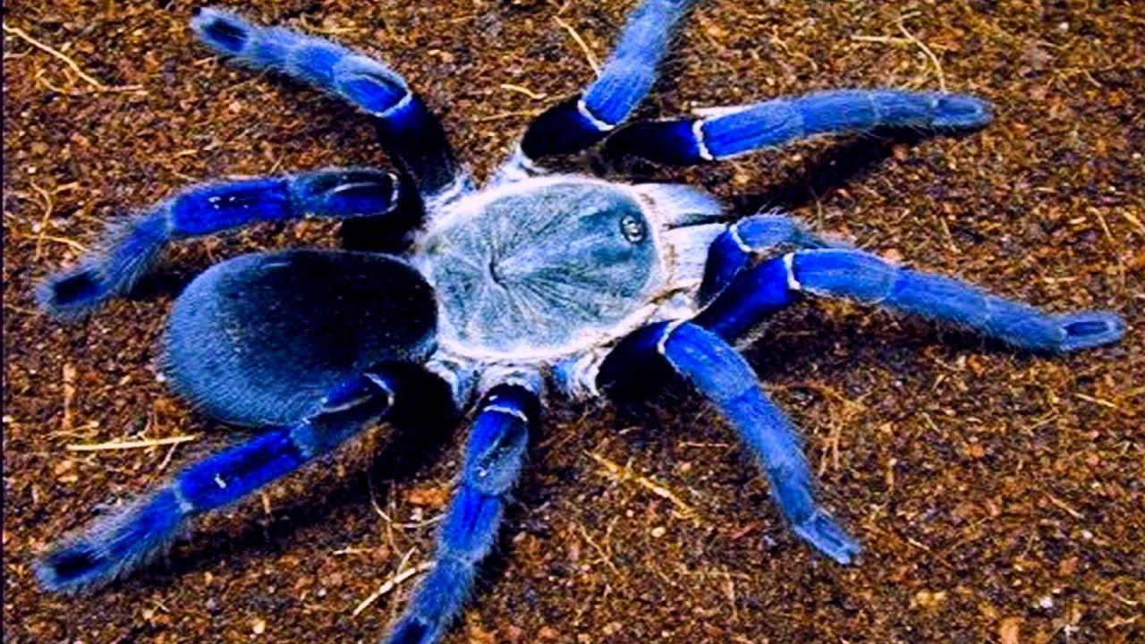Download Top 20 MOST Venomous Spiders