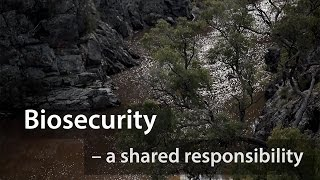 The importance of biosecurityin sustaining Aboriginal culture and heritage