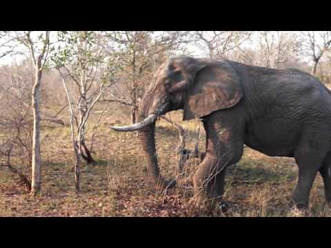 Rhino Post Safari Lodge South Africa