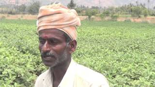 brinjal cultivation  technique