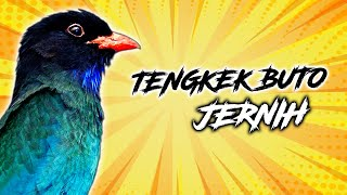 Gambar cover CUKUP RUTIN MEMASTER DENGAN SUARA TENGKEK BUTO PAKAI JEDA DIJAMIN BURUNG LANGSUNG MEREKAM | BIRDSONG
