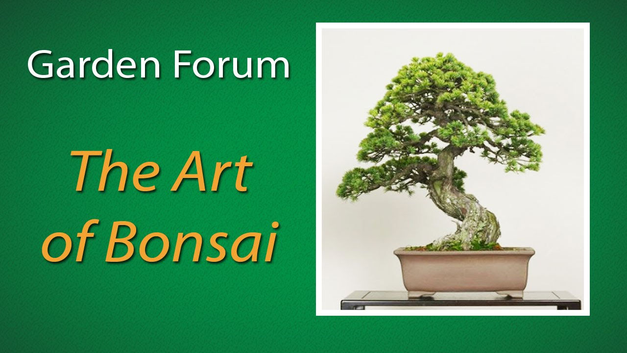 Project Green The Art Of Bonsai Youtube Wiring Not For Dummies