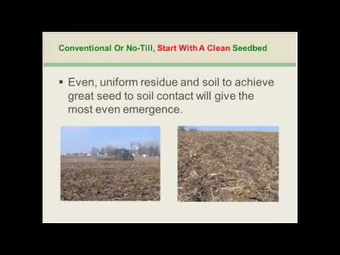 Top Tips for Maximizing Your Soybean Yield - Webinar