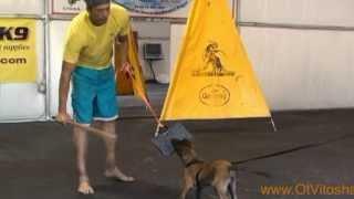 Belgian Malinois Puppies, Ot Vitosha Malinois thumbnail
