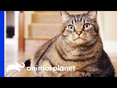 Obese Pets Weight Loss Transformations | My Big Fat Pet Makeover