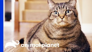 Obese Pets Weight Loss Transformations   My Big Fat Pet Makeover