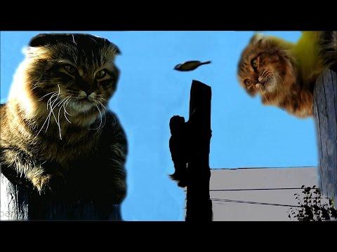 The full version Cat Up a telephone pole КОТ НА телефонном СТОЛБЕ Полная версия