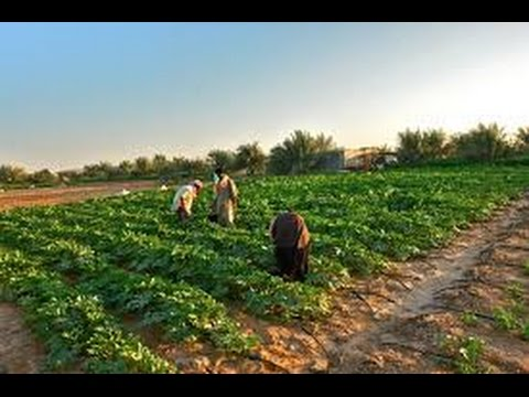 Inside private farm in Qatar