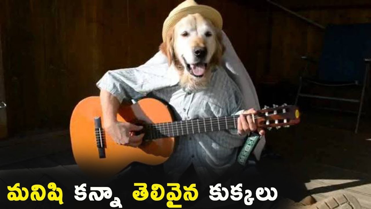 Most Intelligent Dogs in the World    Interesting Facts