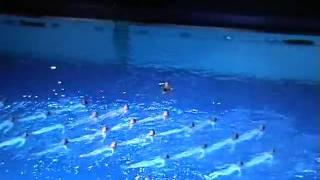 шоу на воде 4