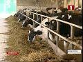 В Беларуси утвержден перечень сельхозкультур, скота и птицы, подлежащих обязательному страхованию
