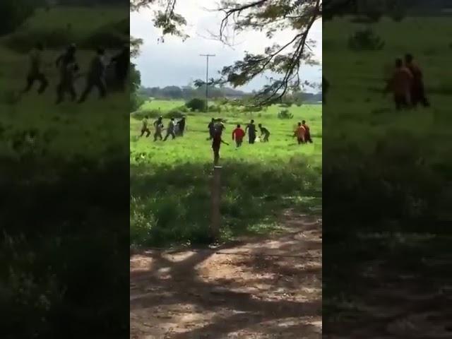 """Matan a pedradas a una vaca en Venezuela al grito de """"¡Hay hambre!"""""""