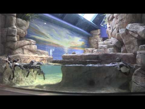 Moody Gardens Introduces Second Penguin Habitat as Part of 37