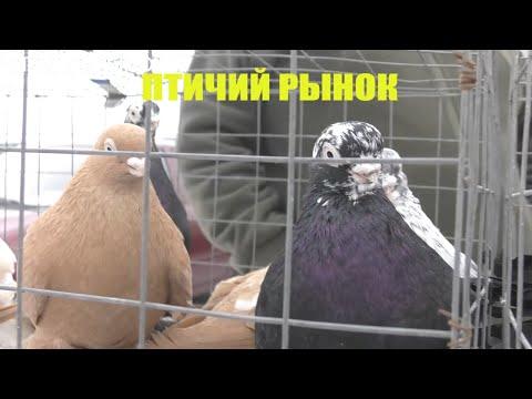 19.01.20. Птичий рынок г Пятигорск ч1.The Bird Market Of Pyatigorsk P1.