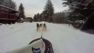 Go Pro Training With 6 Siberian Husky (destiny Of Life Kennel) - Mikolaj Wlodarczyk
