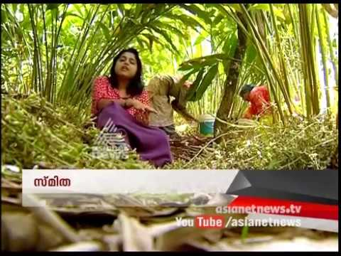Cardamom  Plantations of Idukki | Money Time 22 Jul 2017