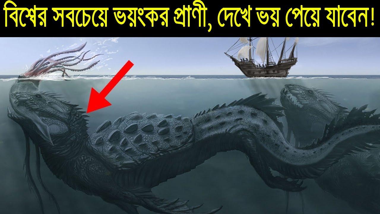 সমুদ্রের সবচেয়ে ভয়ংকর খুনি Kraken - Giant Squid ? Mystery of Giant Squid - Mystery of Kraken