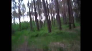 Hoia Baciu Forest Infamous Notorious Circle Romania