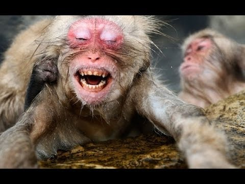 Top 5 Ugliest Animals On Earth - YouTube