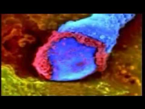2.2.Fertilization - thu tinh.wmv