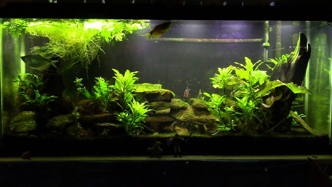 Why I don t inject CO2 in my Freshwater Planted Tanks