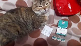 Doctor VIC БИО капли инсекторепеллентные для кошек