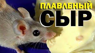 видео: Галилео. Плавленый сыр
