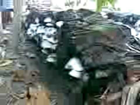 Ubay, Bohol  mushroom (volvariella volvacae) harvest