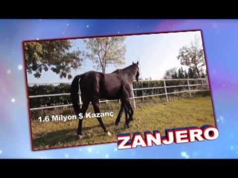 ZANJERO  8Cherokee Run-Checkered Flag by AP Indy)