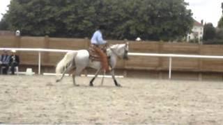 equitation western reining -championnat de france vichy 2011 - Pur sang arabes-Junior
