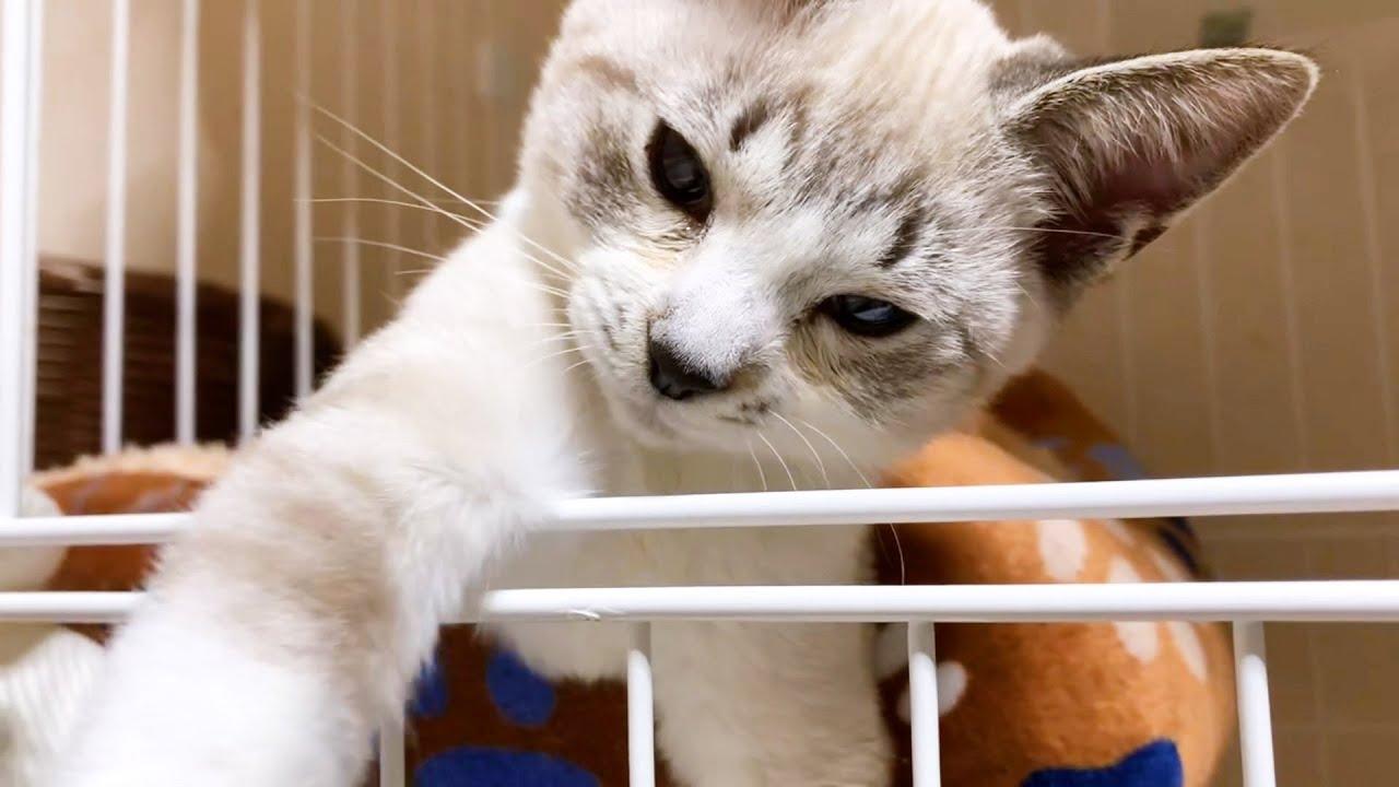 保護子猫リノ 寝ることが勿体ないと思っている子猫♡