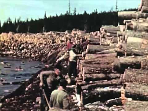 1950s Sawmill Workers Educational Documentary - Timber In The Northeast - CharlieDeanArchives