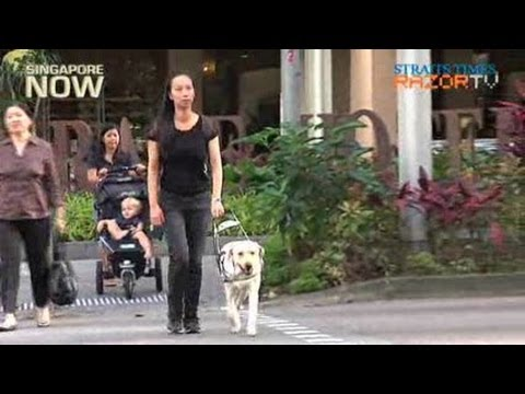 Guide dogs better than human helpers (Guide Dogs for the Blind Pt2)