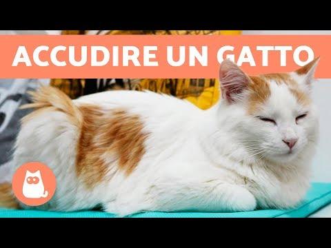 Perché i gatti fanno le fusa - SIGNIFICATO delle fusa di un gatto