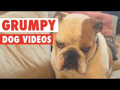 Funny Grumpy Dog Pet Video Compilation 2016